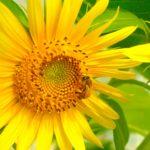 ハチミツの美容効果とは?ハチミツ入りのオールインワンゲル
